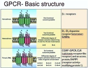 g-protein-coupled-receptors-15-638