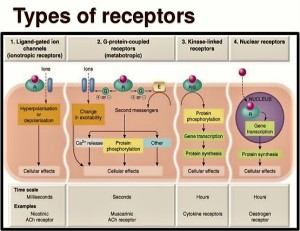 g-protein-coupled-receptors-4-638
