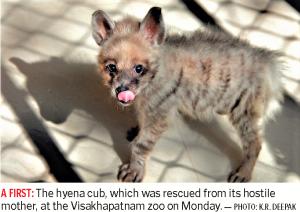 hyenas-cub