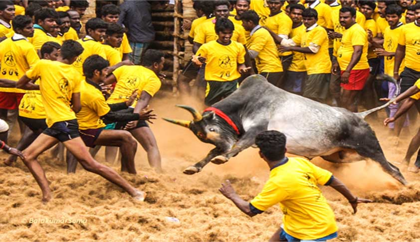 jallikattu-supreme-court-of-india-min
