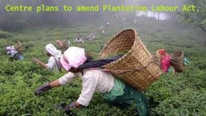 plantation-labour-act