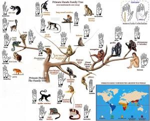 primate-family