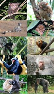 primates_-_some_families