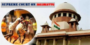 sc-on-jallikattu