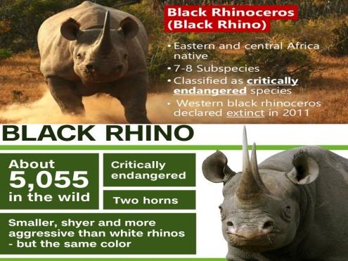 black-rhino-png