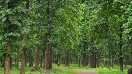 Nilambur is renowned for the oldest teak plantation in the world.