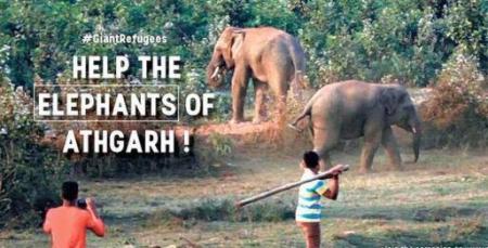 save-elephant