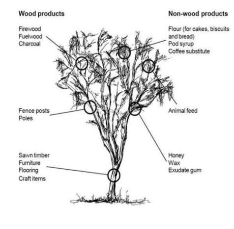 files-tree